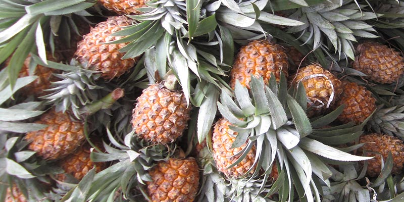 AGRO Pineapple fresh fruit, Ananas India