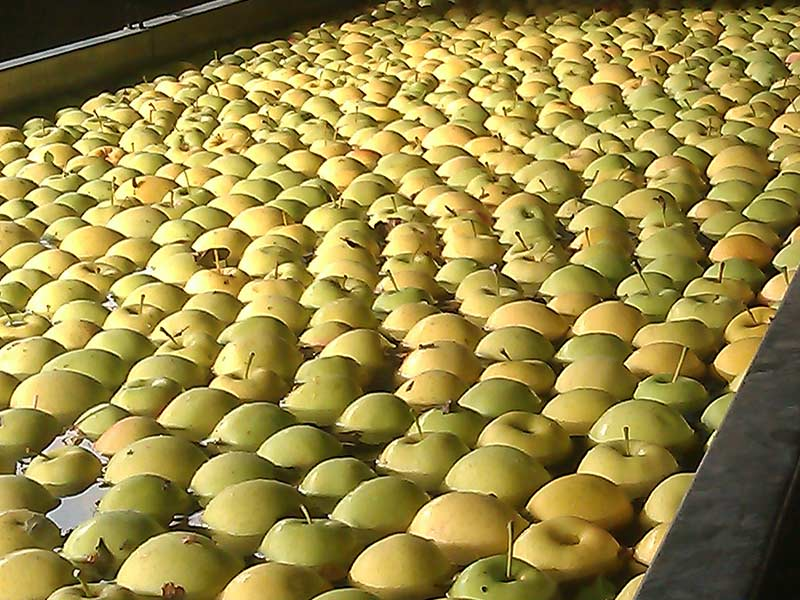 apple fruit sorting washing line agro fa