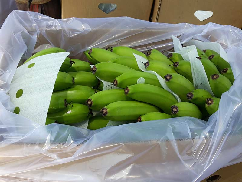 Banana Packed in Box India AGRO fa
