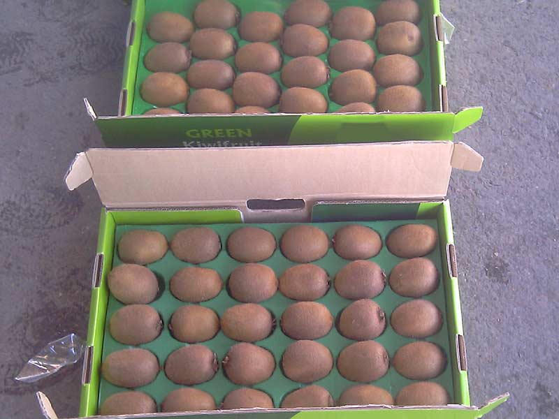 kiwi fruits iran export open top fa