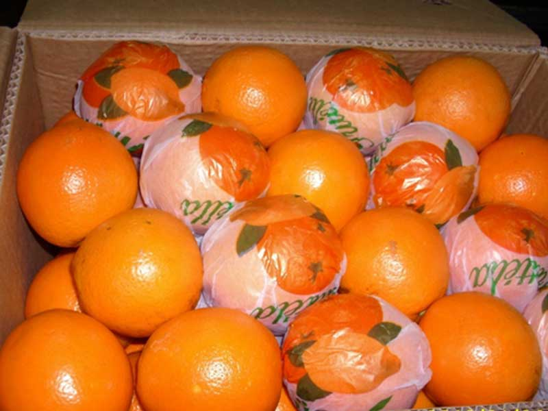 AGRO import valencia oranges egypt