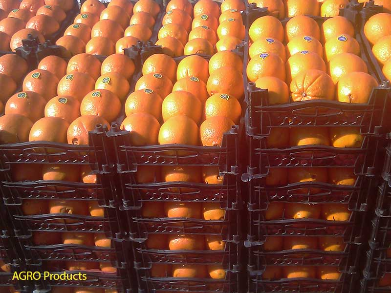 AGRO iran oranges fruit thomson