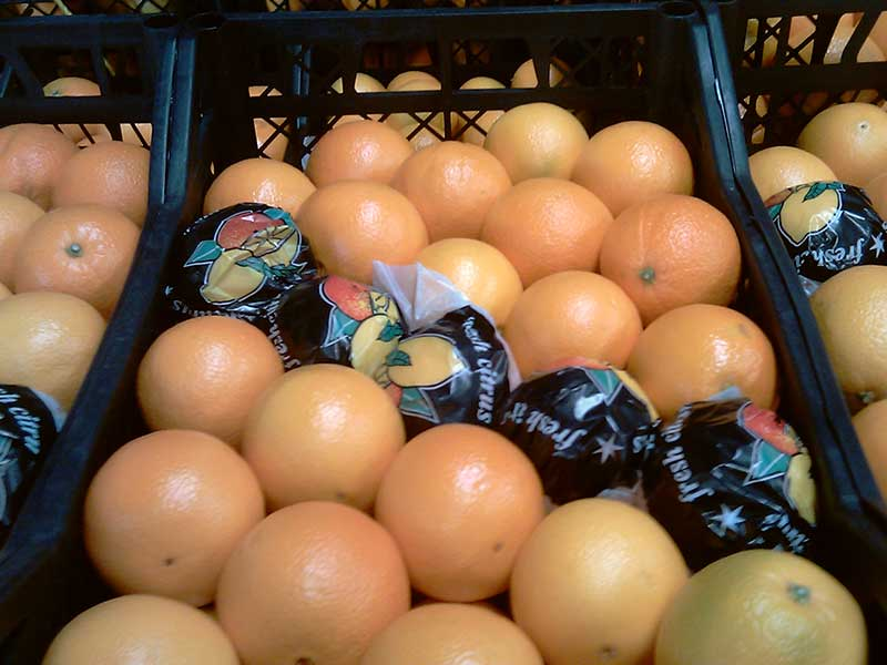 AGRO products iran oranges export