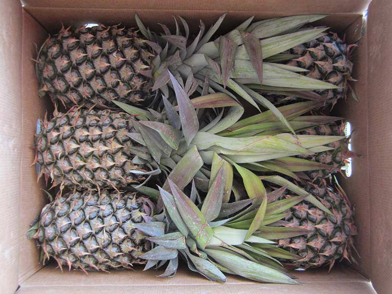 Pineapple fresh fruit 6 counts per box, AGRO Products, Ananas