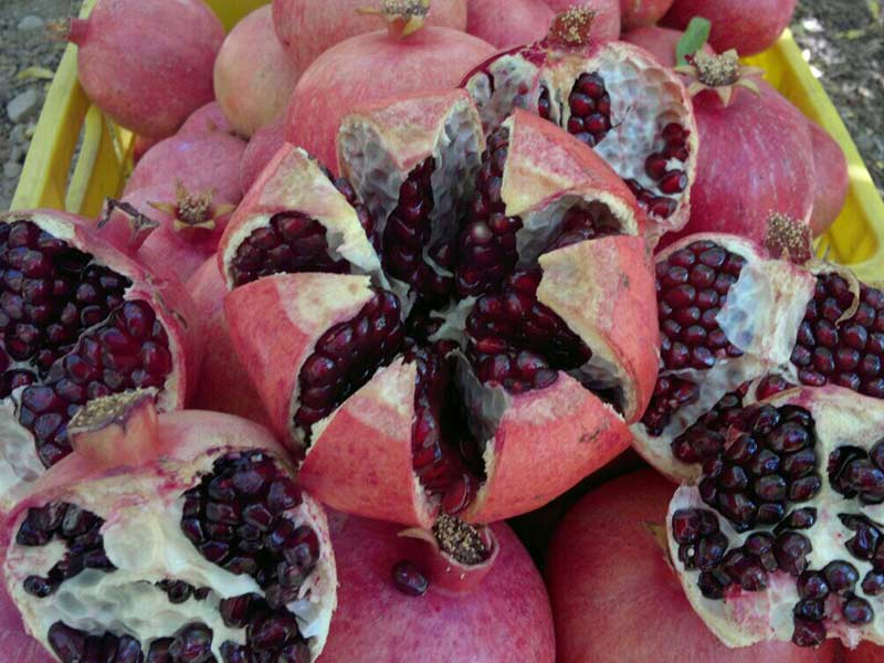 AGRO Pomegranate Sweet Dark Red arils