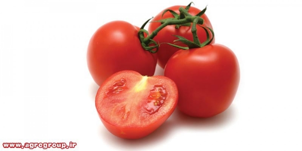 Tomato Export - AGRO Products