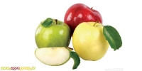 Apple Fruit Export - AGRO Products