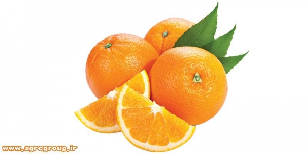 Orange Export Import - AGRO Products